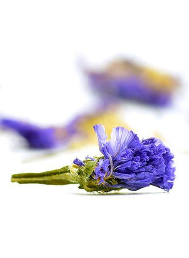 Fleurs de myosotis du Yunnan