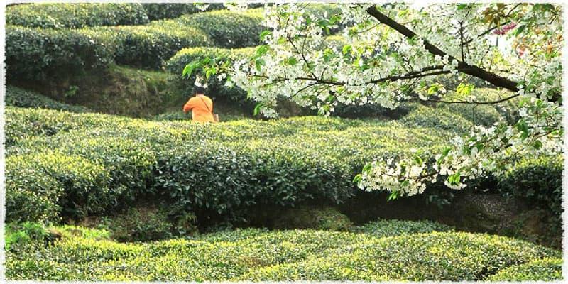 dans les jardins de Nanjiang