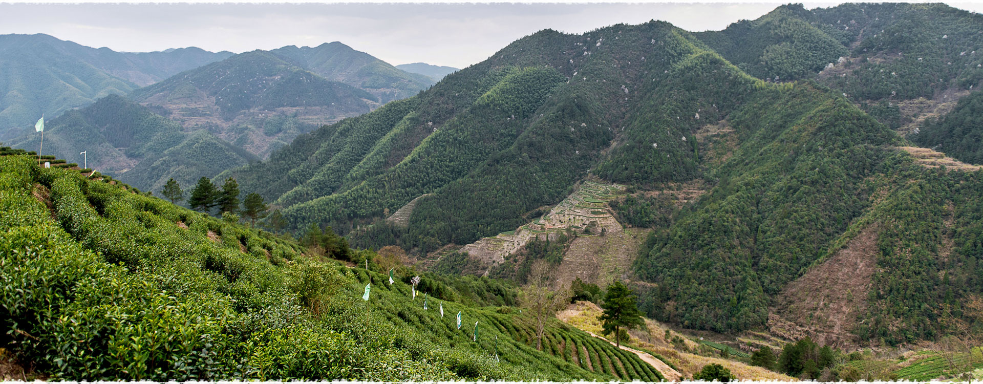 Le jardin de thé Lishui