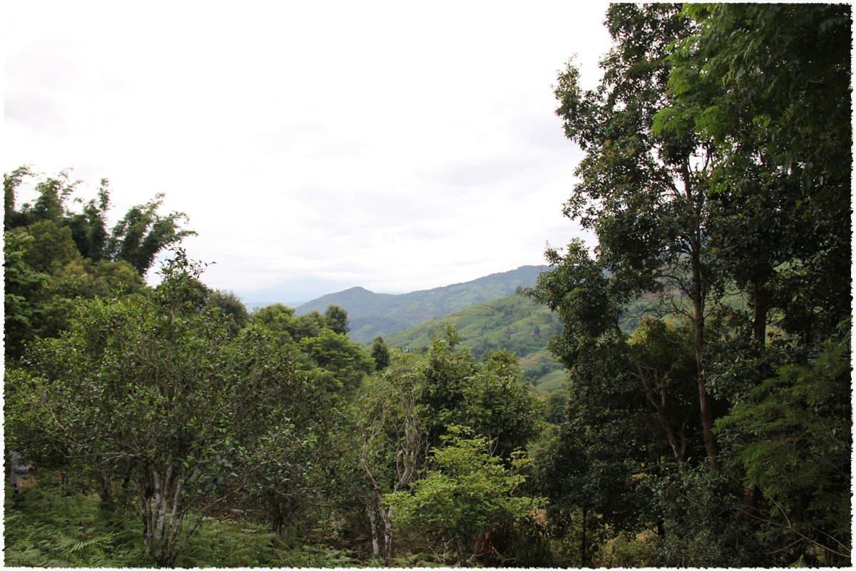 manxinloong village