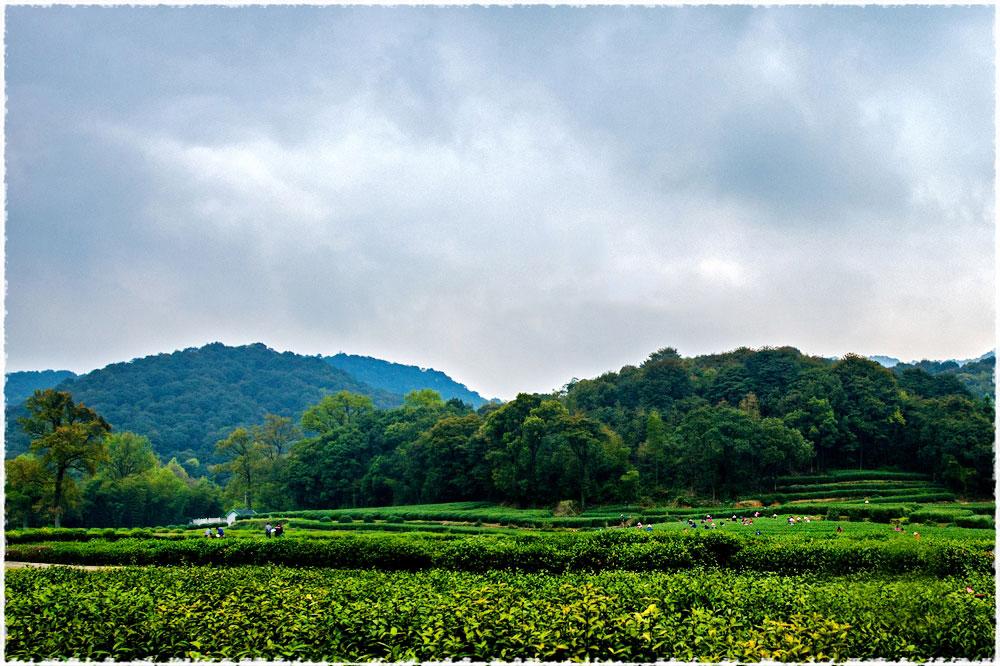 Mejiawu Tea Garden