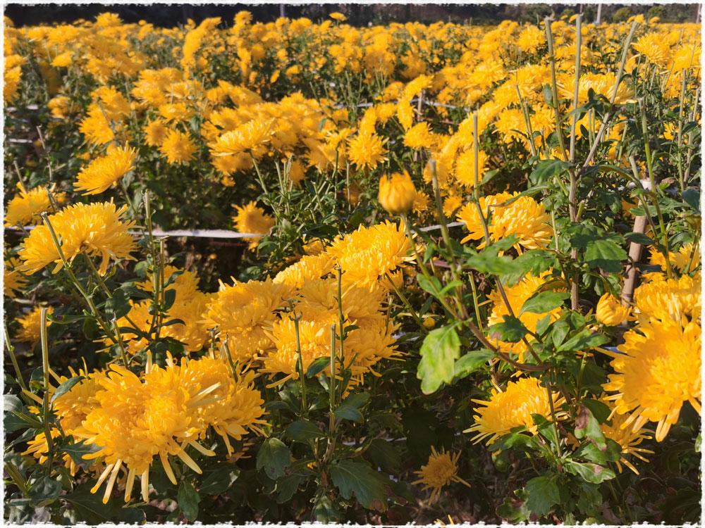 dans les jardins de Jiangxi