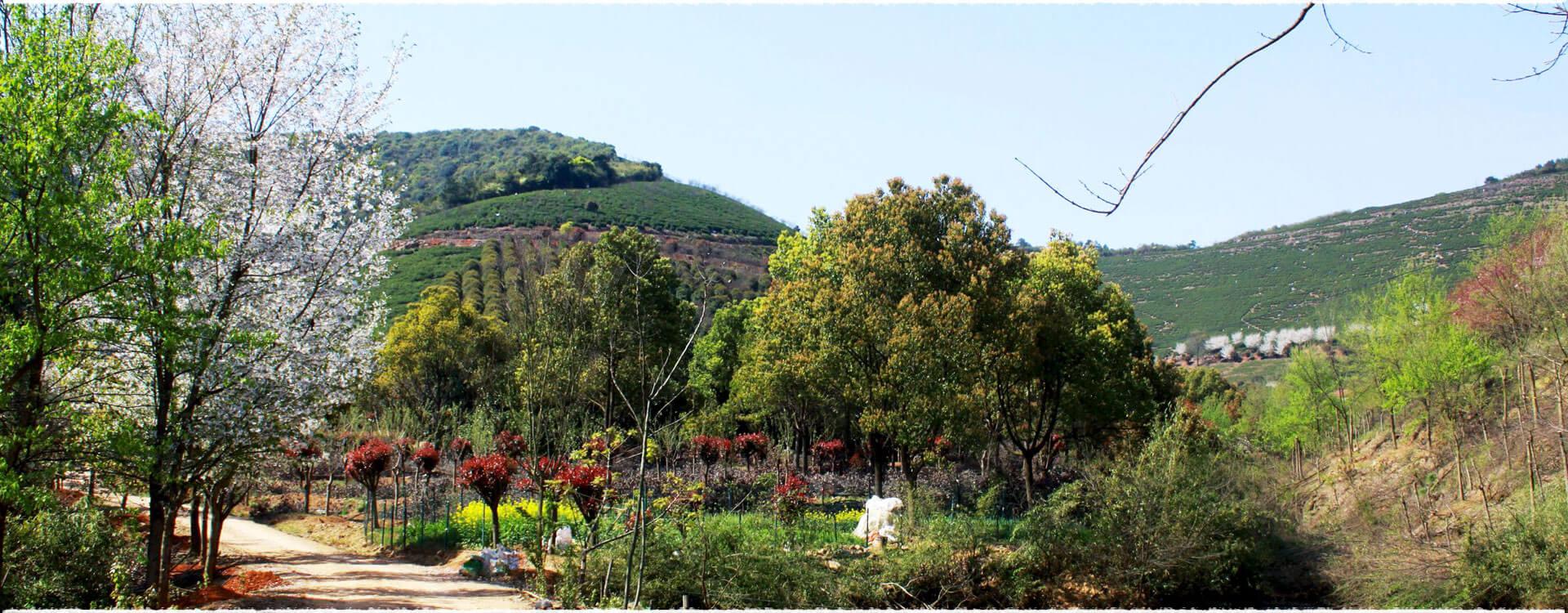 Le jardin de thé Xishan 2